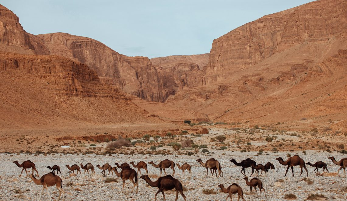 In the Berber's footsteps
